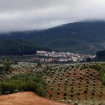 XVIII Jornadas Micológicas «Villas de Siles»